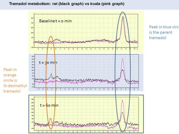 Tramadol metabolism graphs